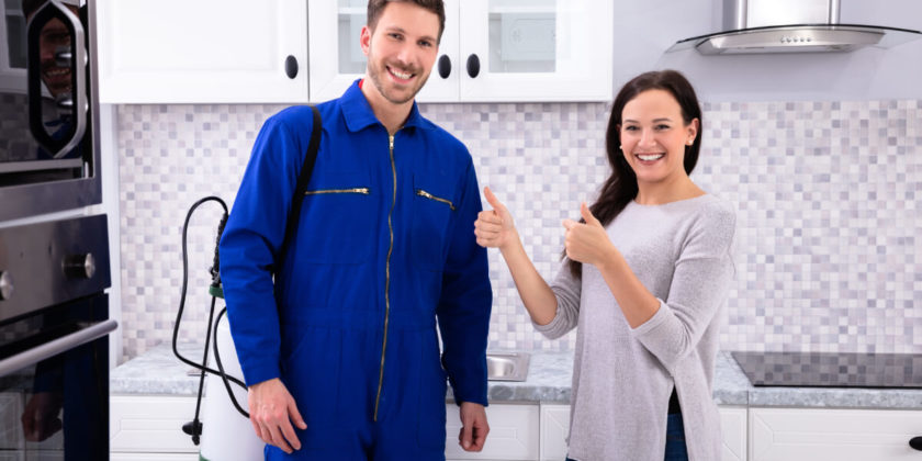 Earwigs, Local Pest Control Companies Can Assist You In Removing Them From Your Home