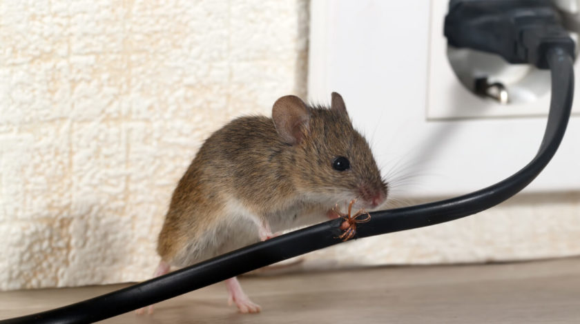 rodent control experts provide signs you have mice in your Omaha or Iowa home