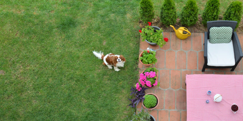 dog enjoying backyard thanks to mosquito removal services
